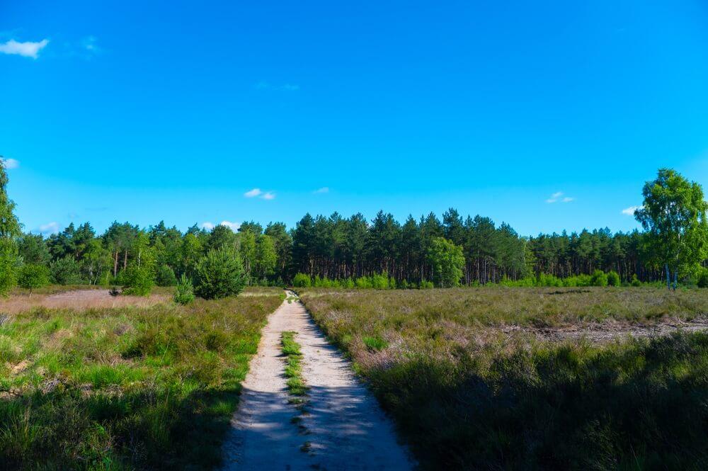 Zomervakantie bestemming in Europa, groene Kempen bos en weiden in Noord-Brabant, Nederland in zonnige dag, natuur achtergrond.