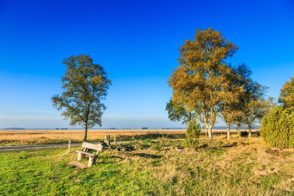Nationaal Park Dwingelderveld in de Nederlandse provincie Drenthe is een uitgestrekt natuurgebied in oorspronkelijk landschap met graspaden, berkenbomen, eiken en de zeldzame wilde jeneverbesstruik.