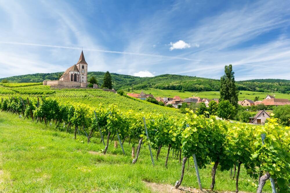 oude kerk en wijngaarden in het dorp Hunawihr in de Elzas, Frankrijk.