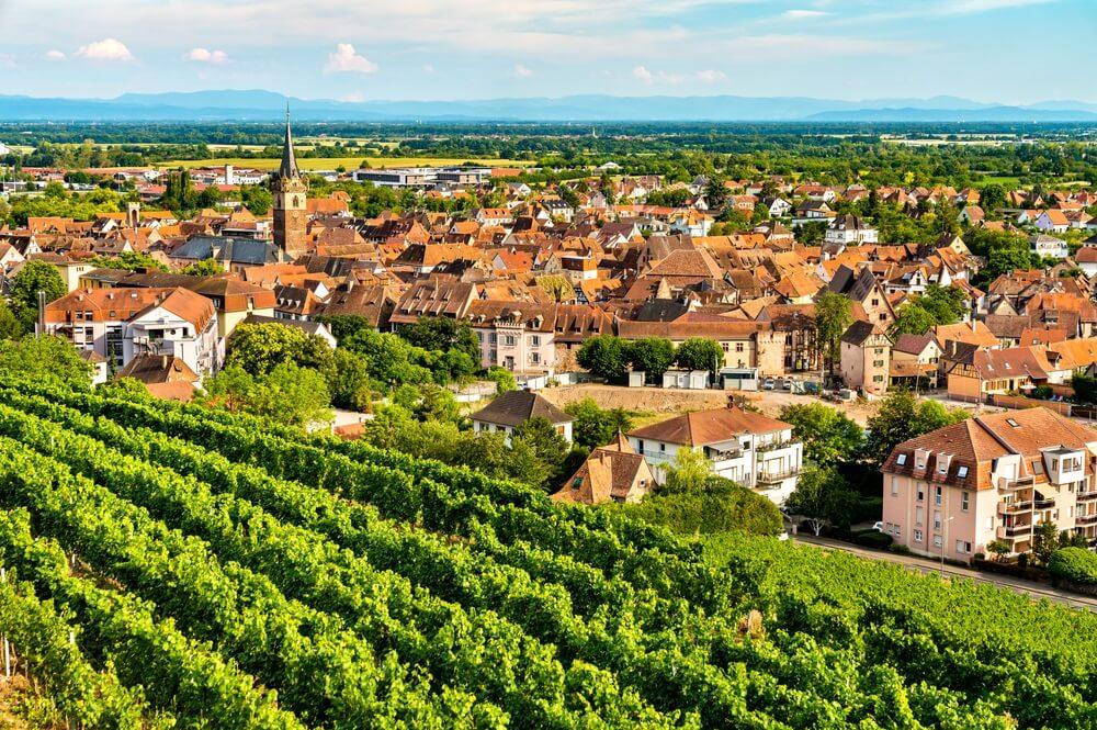 Stad Obernai met wijngaarden in Bas-Rhin, Frankrijk
