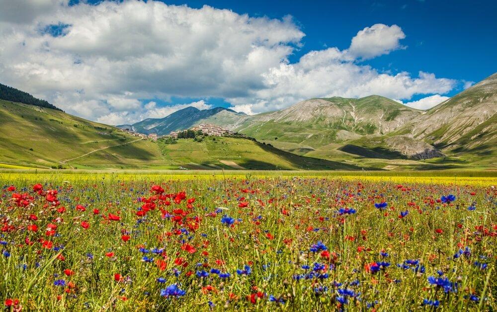 Kleurrijke bloemen in het Monti Sibillini Nationaal Park,Umbrië, Italië.