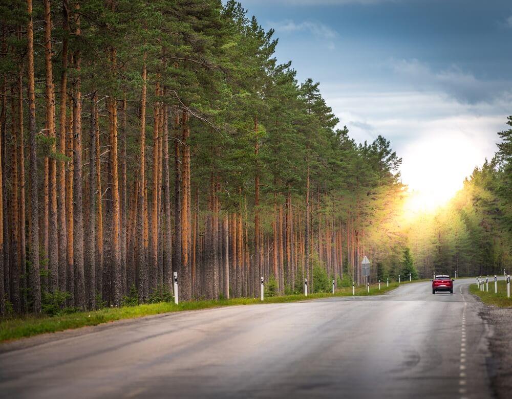 Prachtig schilderachtig uitzicht van eenzame auto rijden langs woestijn asfaltweg omzoomd met bomen, bos van dennen, nordic landschap in de zomer, zonne-effect. Lahemaa National Park, Estland. Bos achtergrond.