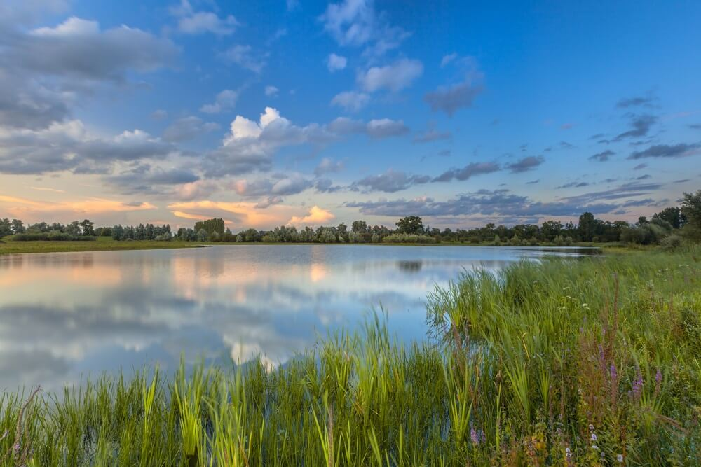 Lange blootstelling beeld van de uiterwaarden van de Rijn in nationaal park de Blauwe Kamer nabij Wageningen, Betuwe, Nederland.