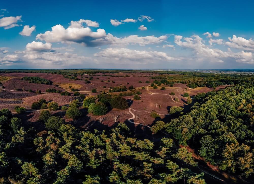 Veluwezoom Posbank Nederland, bloeiende heuvels met heidebloem tijdens het einde van de zomer.