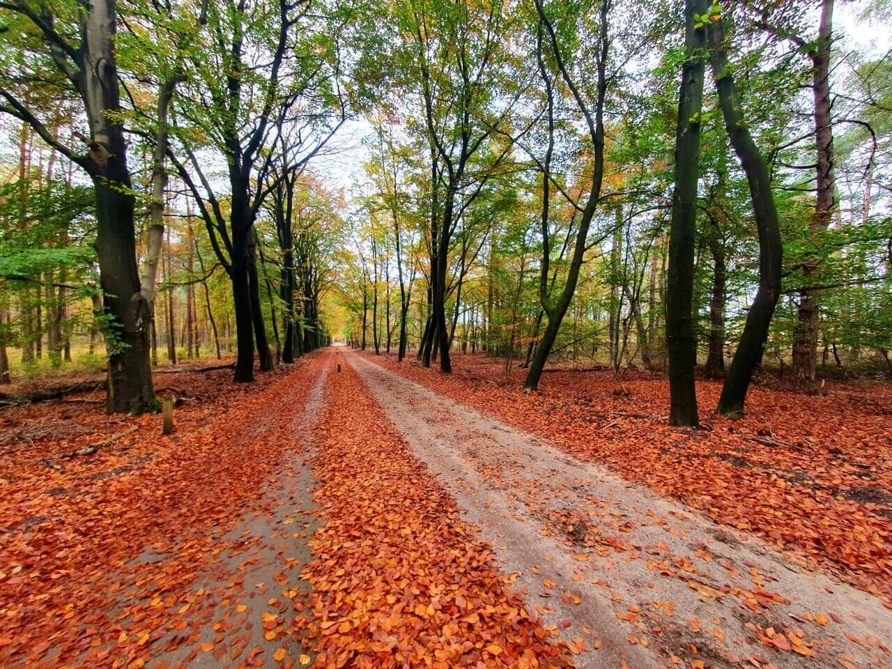 De Leuvenumse bossen in de herfst. Gelderland.