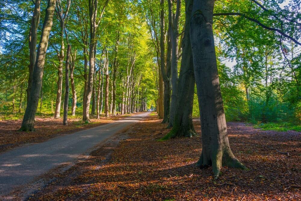 Bomen in herfstkleuren in een bos in fel zonlicht in de herfst, Baarn, Lage Vuursche, Utrecht, Nederland, 16 oktober 2020.