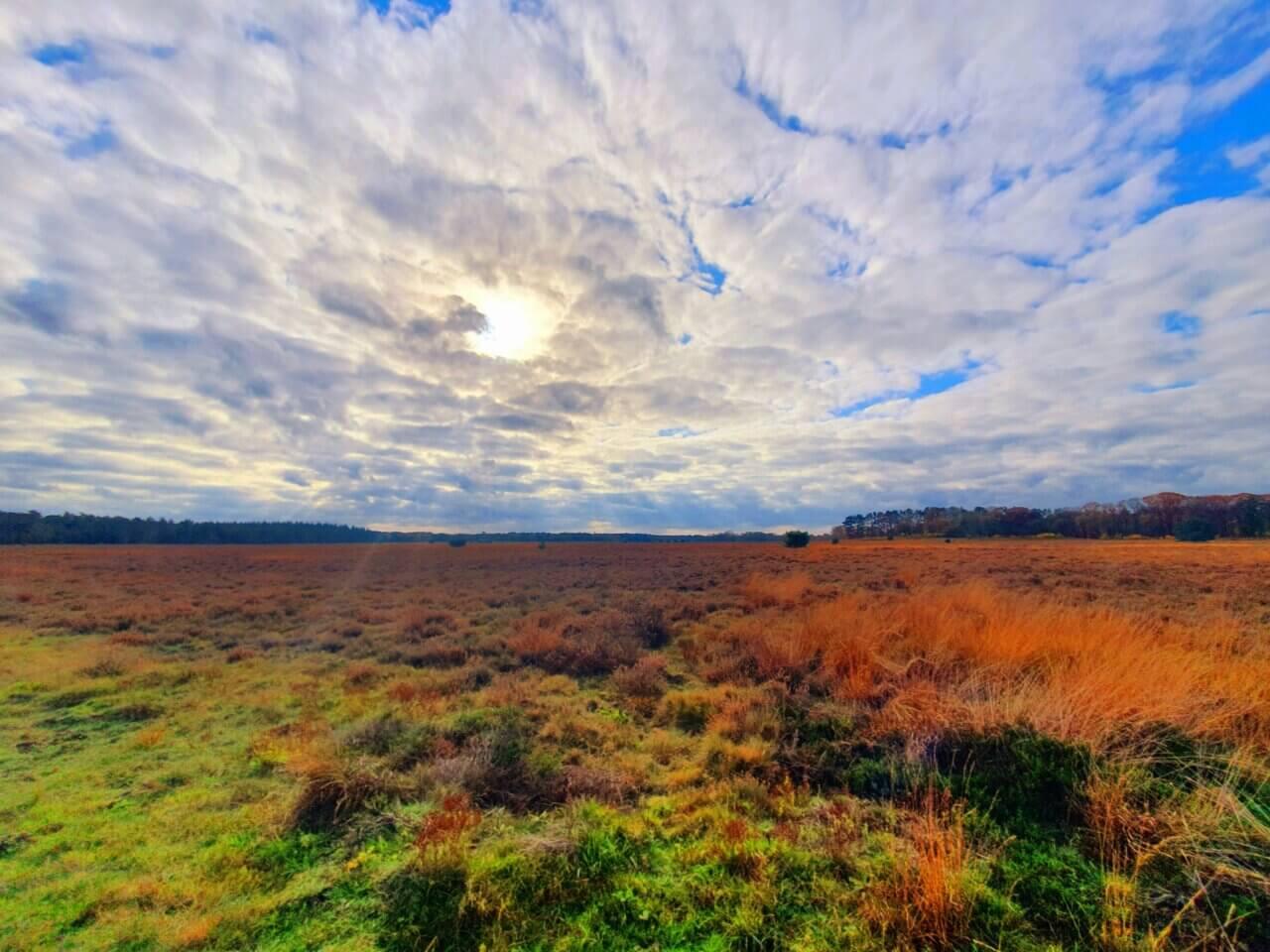 De prachtige gekleurde Ginkelse Heide.