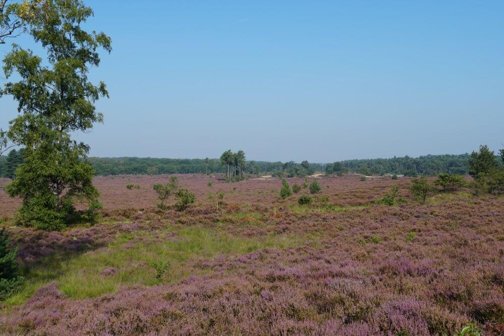 Heide- en bosgebied genaamd Den Treek Henschoten, gezien vanaf het Treekerpunt, onderdeel van de Utrechtse Heuvelrug (nationale parken in Nederland)