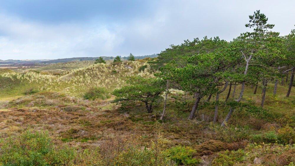 Gezichtspunt Turfveld met schilderachtig uitzicht op Nationaal Park Duinen Texel, Noord-Holland, Nederland,