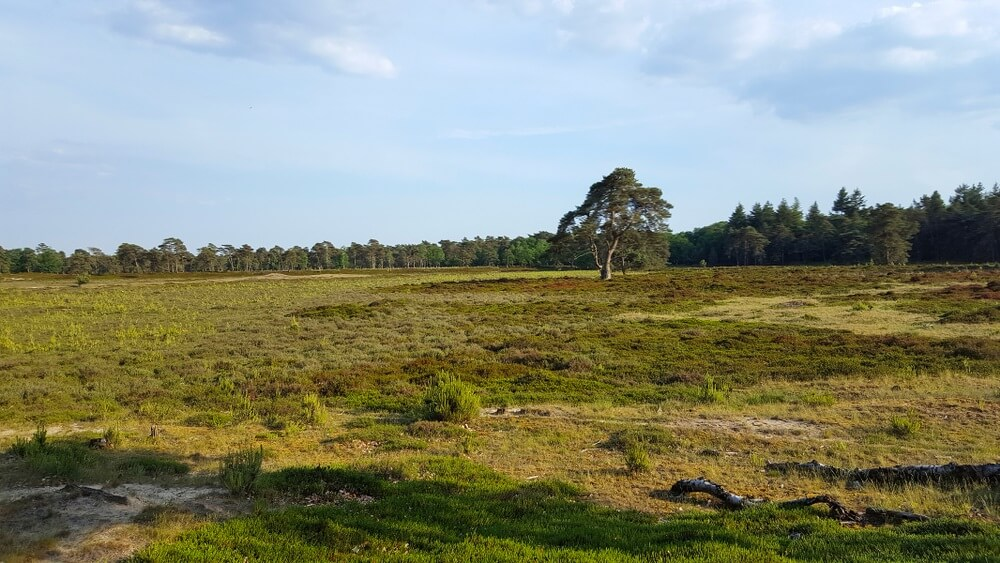Nationaal Park Drents- Friese Wold